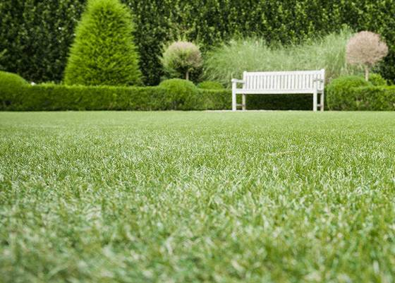 Wickes Namgrass Eclipse